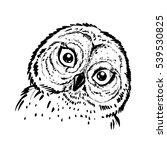 hand drawn ink illustration owl.... | Shutterstock .eps vector #539530825