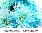 blue and white chrysanthemums   Shutterstock . vector #539568139