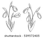 Snowdrop Flower Graphic Black...