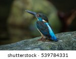 Small photo of A beautiful Banded Kingfisher(Albedo euryzona) with nature background standing on the rock in the nature,water bird,colourful bird,Southern Thailand in tropical rainforests near lake shores