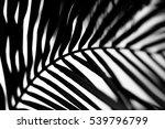 palm leaf | Shutterstock . vector #539796799
