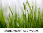 Green Grass On The Grass With...