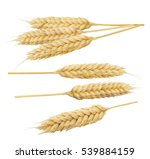 wheat cereal spikes set 5... | Shutterstock . vector #539884159