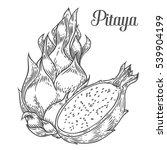 pitaya sketch of tropical...   Shutterstock .eps vector #539904199