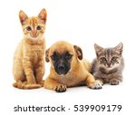 Stock photo kittens and puppy isolated on a white background 539909179