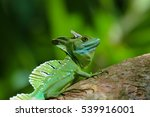 emerald basilisk in costa rica | Shutterstock . vector #539916001