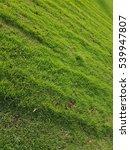 texture of fresh green grass... | Shutterstock . vector #539947807