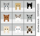 Cat Vector Illustration. 9 Set