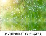 soft focus the water droplets... | Shutterstock . vector #539961541