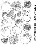 citrus. set of fruit. fresh... | Shutterstock .eps vector #539973211
