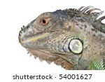 reptile animal lizard green iguana - stock photo