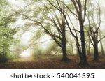 Natural Landscape. Green Fores...