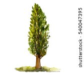 green tree poplar isolated on... | Shutterstock . vector #540047395