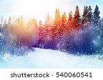 Beautiful Winter Forest...