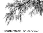 realistic birch tree branches...