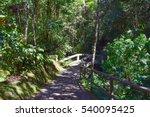 mt. kinabalu botanical garden... | Shutterstock . vector #540095425