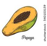 papaya sketch hand drawn vector ...   Shutterstock .eps vector #540103159