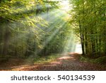 morning in the forest   Shutterstock . vector #540134539