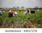 unidentifable workers pick... | Shutterstock . vector #54017278