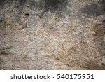 Texture Of Moss Land