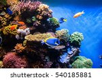 tropical fishes on the coral... | Shutterstock . vector #540185881
