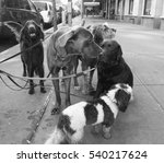 Stock photo dogs in the city 540217624