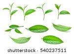 Set Of Green Tea Leaves...
