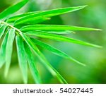 green bamboo leaf. shallow dof. | Shutterstock . vector #54027445