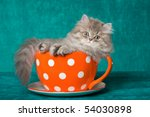 Stock photo pretty chinchilla persian kitten in large cup on green background 54030898