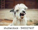 funny alpaca smile and teeth ... | Shutterstock . vector #540327637