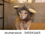 Cat Lion Head Hat Close Up...