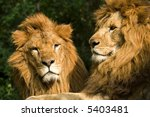 twin lions | Shutterstock . vector #5403481