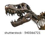 Tyrannosaurus Scull Isolated O...