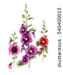 malva flowers. watercolor... | Shutterstock . vector #540400015