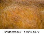 Orange Background With Animal...