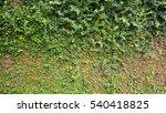 creep vine wall vertical green... | Shutterstock . vector #540418825