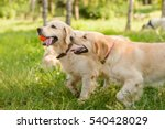 Playful Dogs During Their Walk...