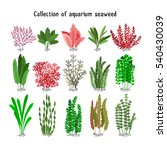 seaweed set vector illustration.... | Shutterstock .eps vector #540430039