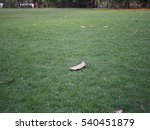 the dry leaf fall on green... | Shutterstock . vector #540451879