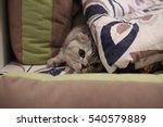 Cat Hiding Behind Pillows