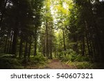 a path in the forest | Shutterstock . vector #540607321