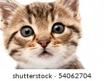 Stock photo little grey cat isolated on white 54062704