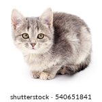 Stock photo small gray kitten isolated on white background 540651841
