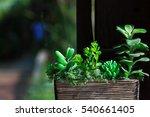 green succulents tree in the... | Shutterstock . vector #540661405
