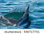 shark fin above water. closeup... | Shutterstock . vector #540717751