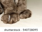 paws cat declawed. close up. ... | Shutterstock . vector #540728095
