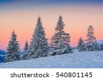 spruce trees  covered with... | Shutterstock . vector #540801145