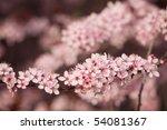 Detail Of Pink Blooming Tree...