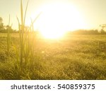 field of grass and sun in... | Shutterstock . vector #540859375