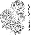 rose flowers drawing vector... | Shutterstock .eps vector #540973459